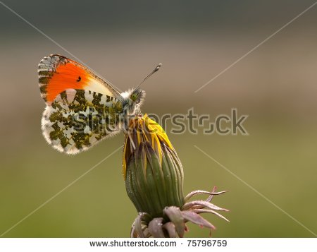 Butterfly White Sits Stock Photos, Royalty.