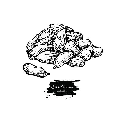 Silhouette Of Cardamom Clip Art, Vector Images & Illustrations.
