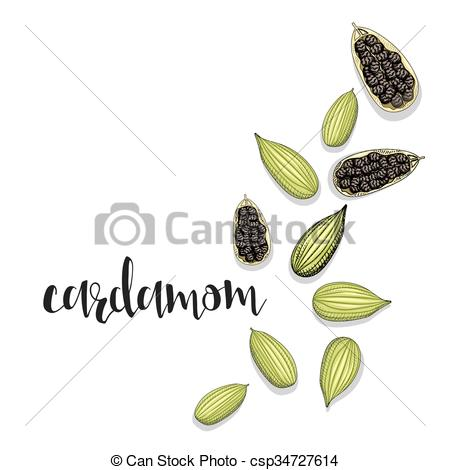 Vector Clip Art of Cardamom isolated object sketch. Spice for food.