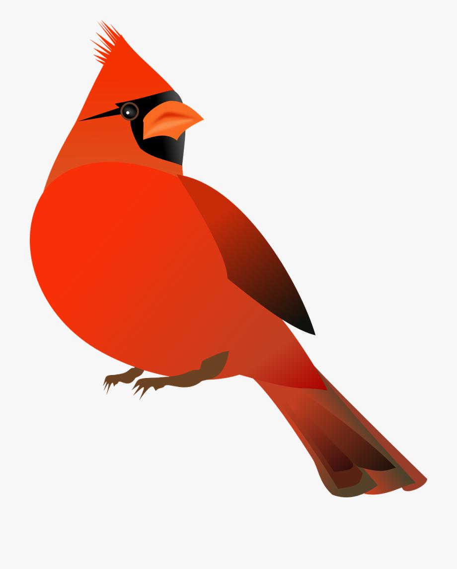 Red Cardinal Clipart, Cliparts & Cartoons.