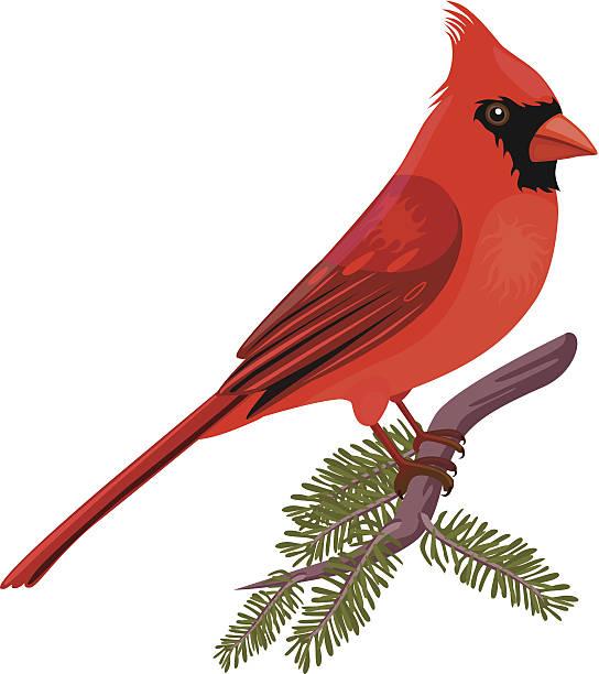 1301 Cardinal free clipart.