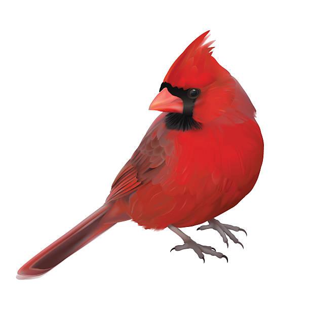 Cardinal bird clipart 4 » Clipart Station.