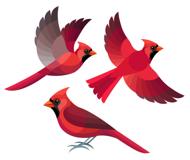 Best Cardinal Bird Illustrations, Royalty.