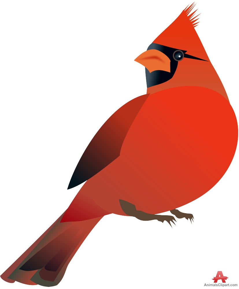 Cardinal bird clipart outline.