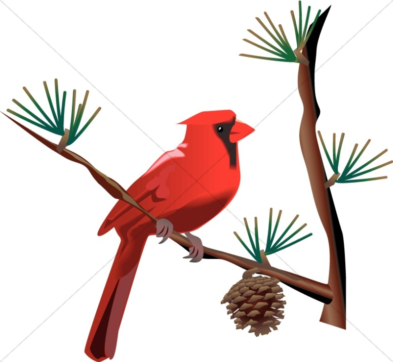 Red Cardinal on Branch.