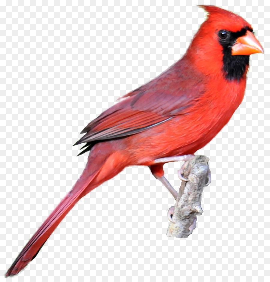 Cardinal Png Free Art & Free Cardinal Art.png Transparent Images.