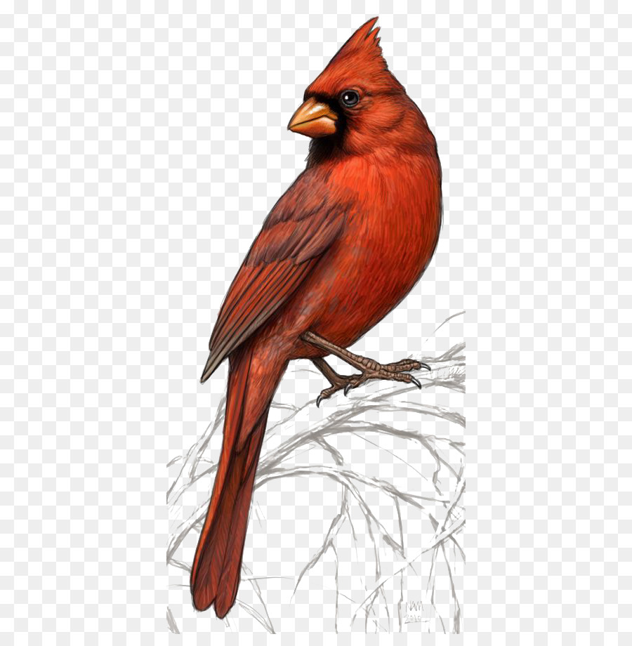 Clipart basque cardinal for free download and use images in.