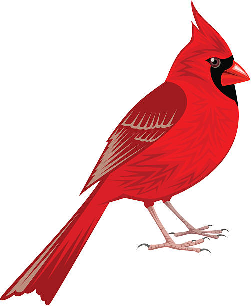 Clipart of a cardinal 7 » Clipart Station.