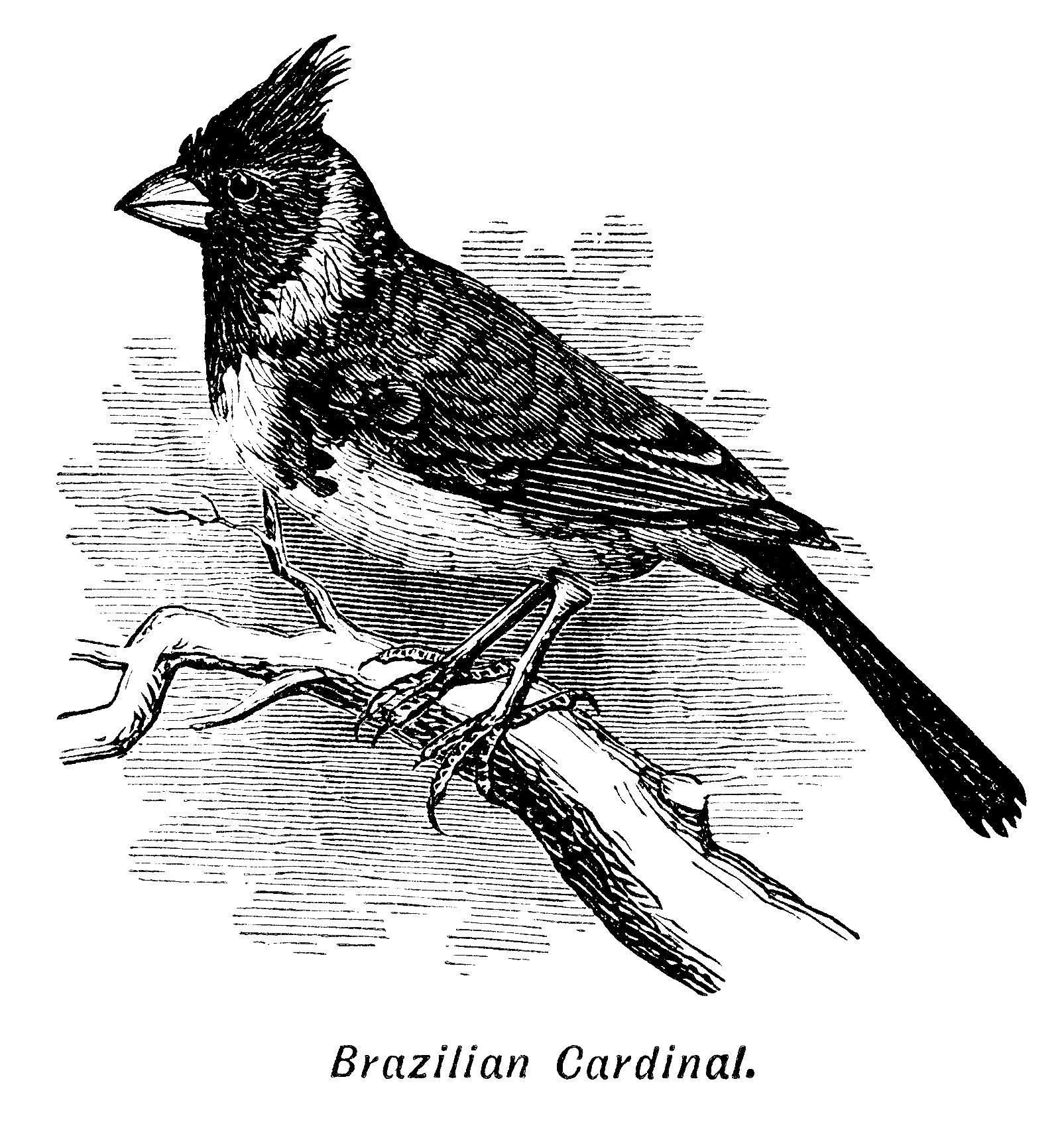 Brazilian Cardinal Bird Free Clip Art.