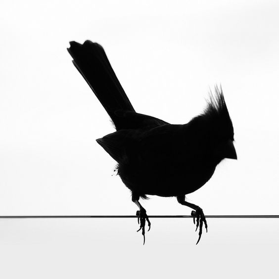 cardinal clipart black and white silhouette 20 free ...