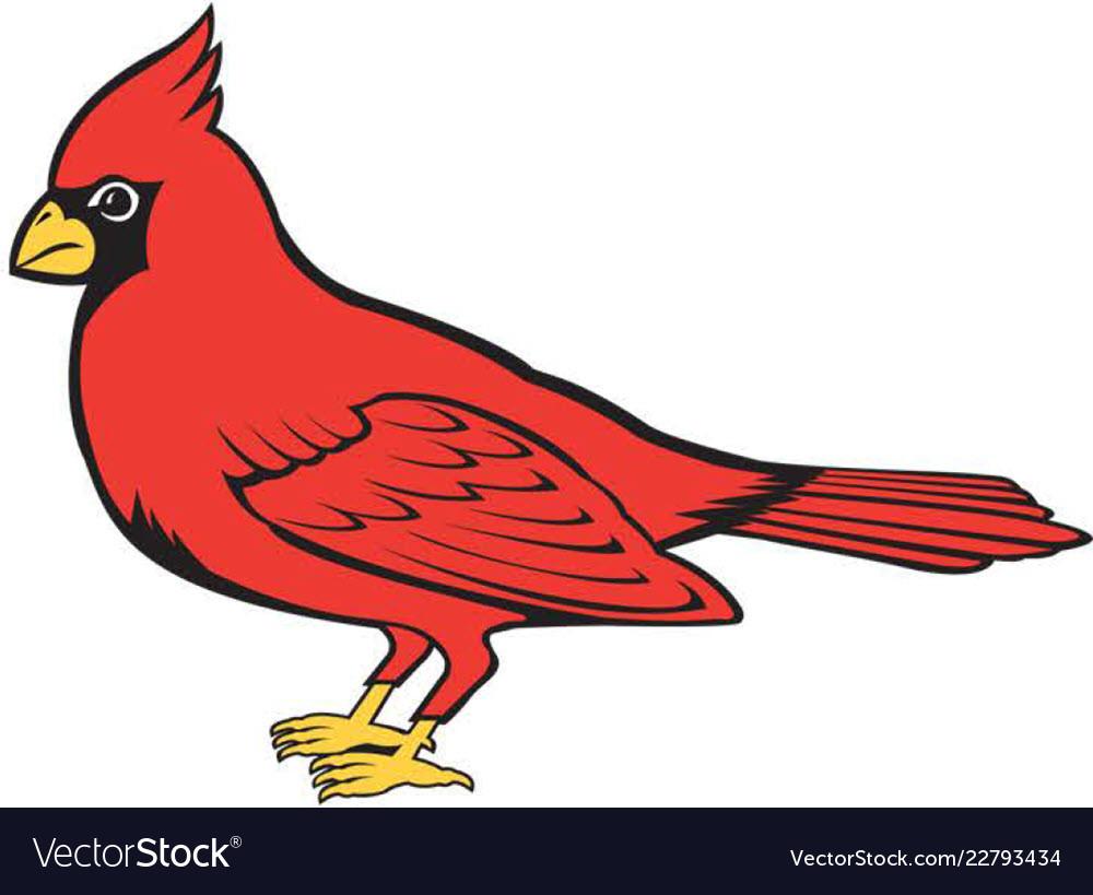 Cardinal logo mascot.