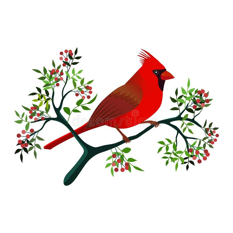 Cardinal Bird Stock Illustrations.