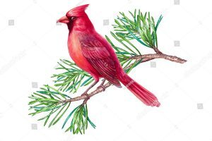 Cardinal on branch clipart 8 » Clipart Portal.