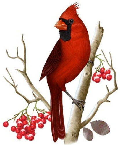 Red Cardinal Bird Clip Art.
