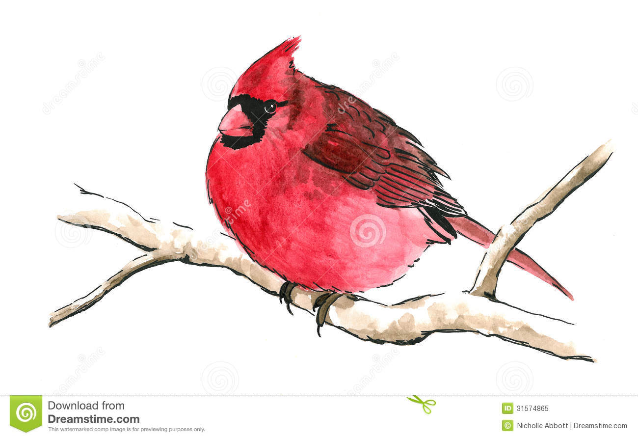 Red Cardinal Bird On Tree Branch Stock Illustration.
