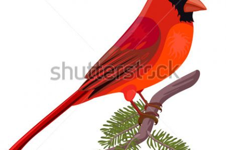 Cardinal Clipart & Free Clip Art Images #158.