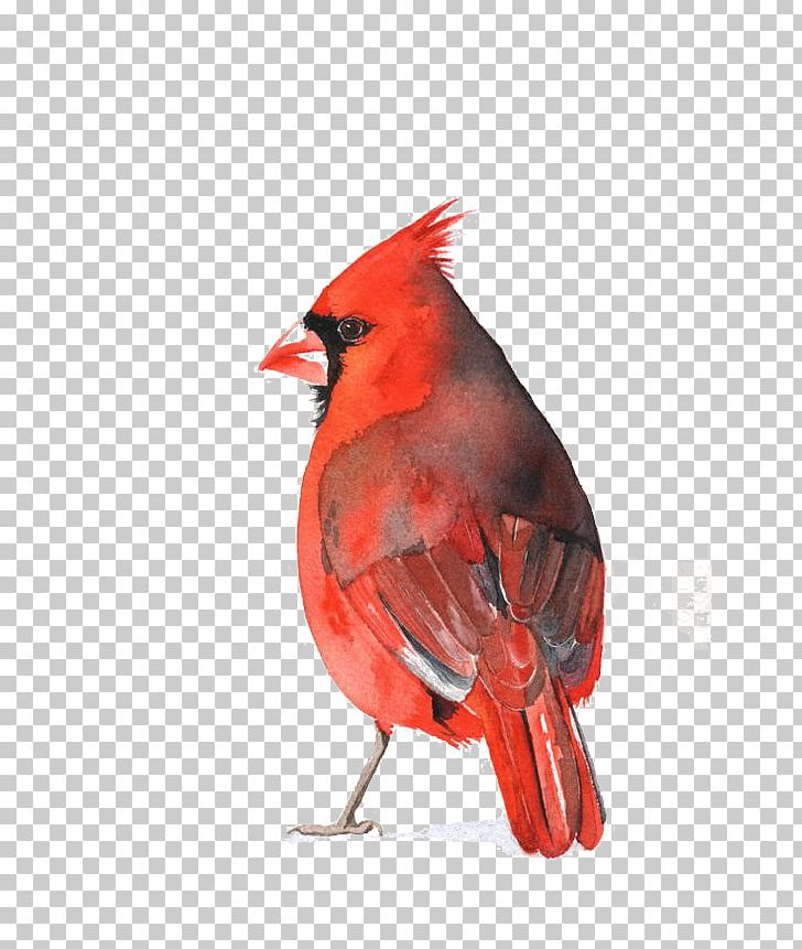 Watercolor Painting St. Louis Cardinals Art Bird PNG, Clipart.