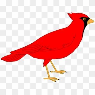 Cardinal PNG Images, Free Transparent Image Download.