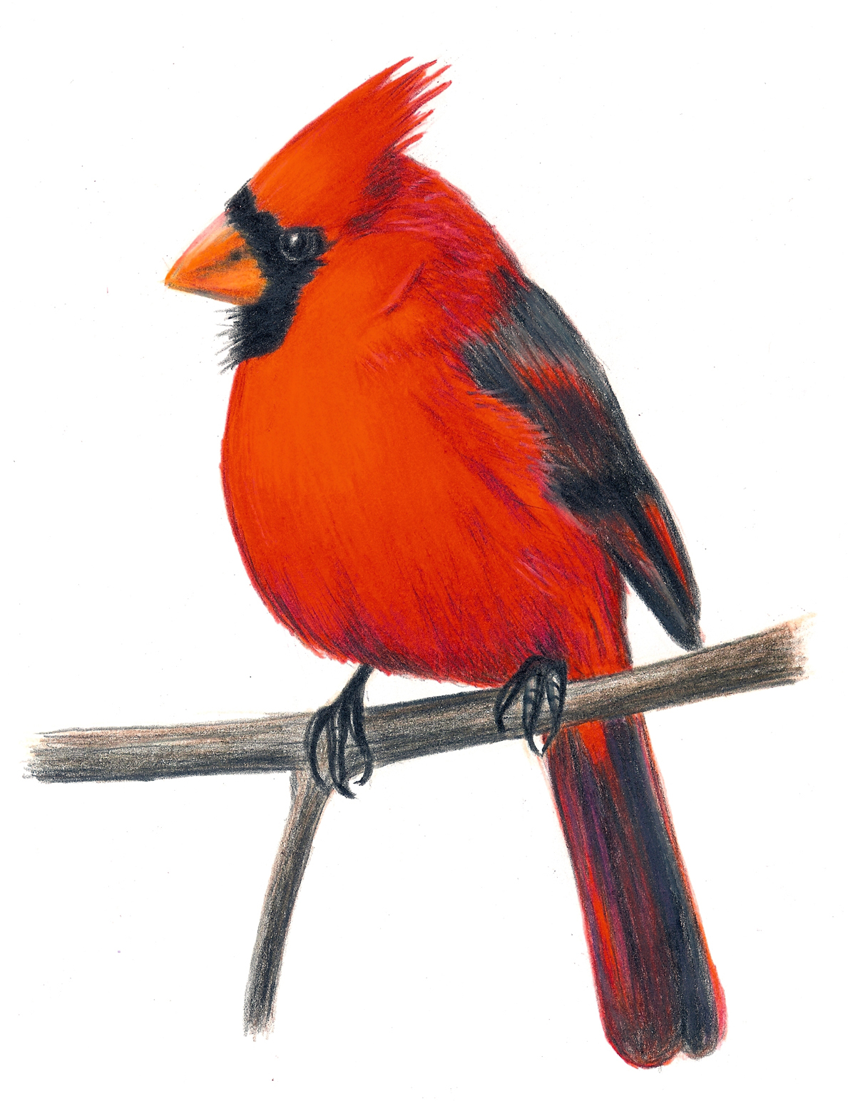 Download Cardinal Kid Png Images Clipart PNG Free.