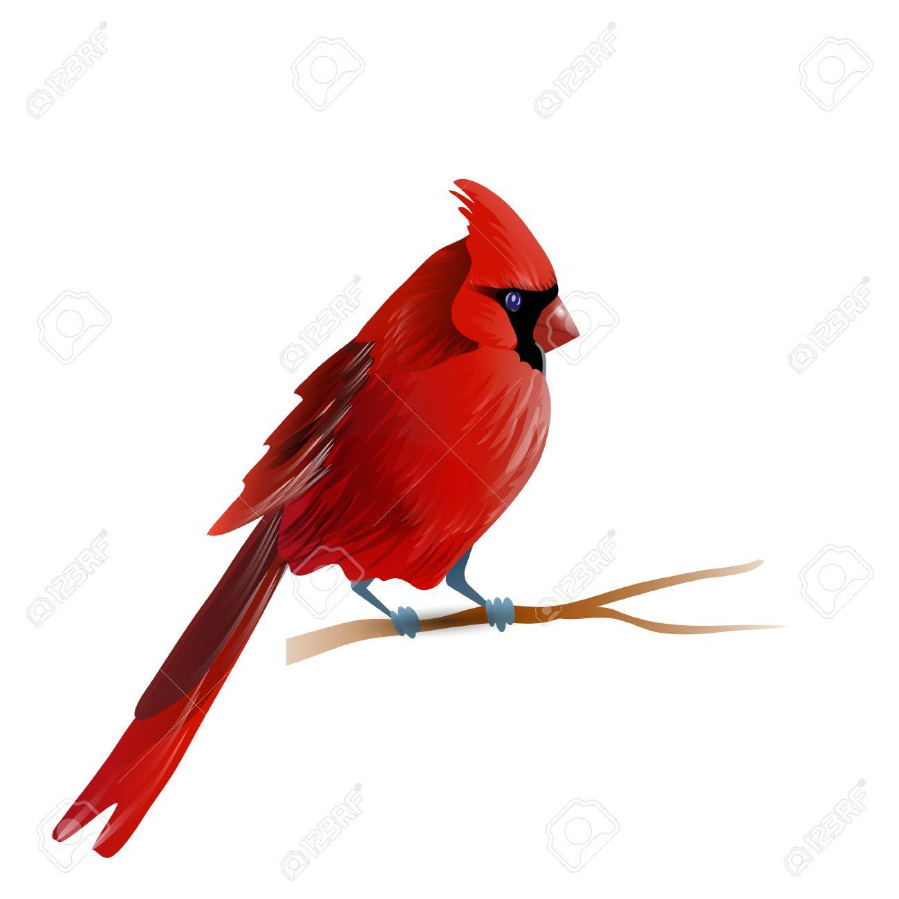 Cardinals Clipart Free & Free Clip Art Images #16873.