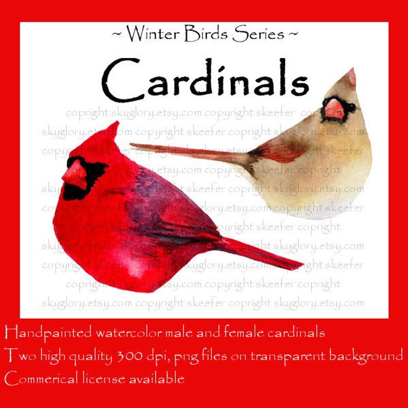 Cardinal clip art Christmas clip art Holiday clip art Bird clip art  Watercolor clip art Winter bird Finch Avian Red Female Cardinal Snowbird.