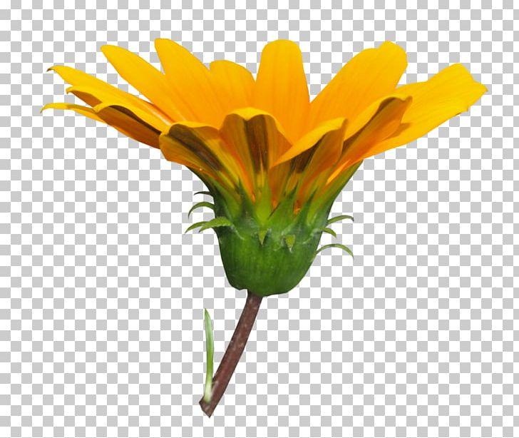 Dandelion Cut Flowers Petal Floral Design PNG, Clipart.