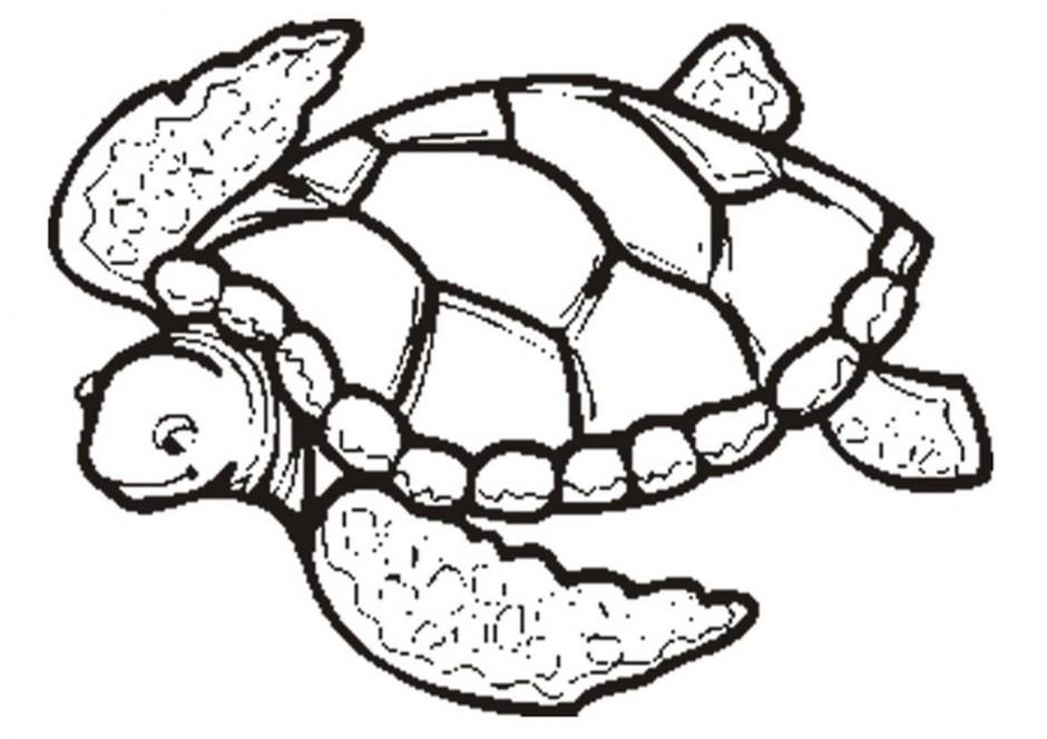 Sea Turtle Illustration.