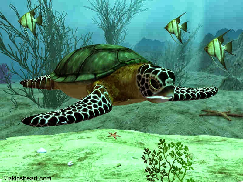 Rules of the Jungle: Why Are The Sea Turtles Not Suited As Pets?.