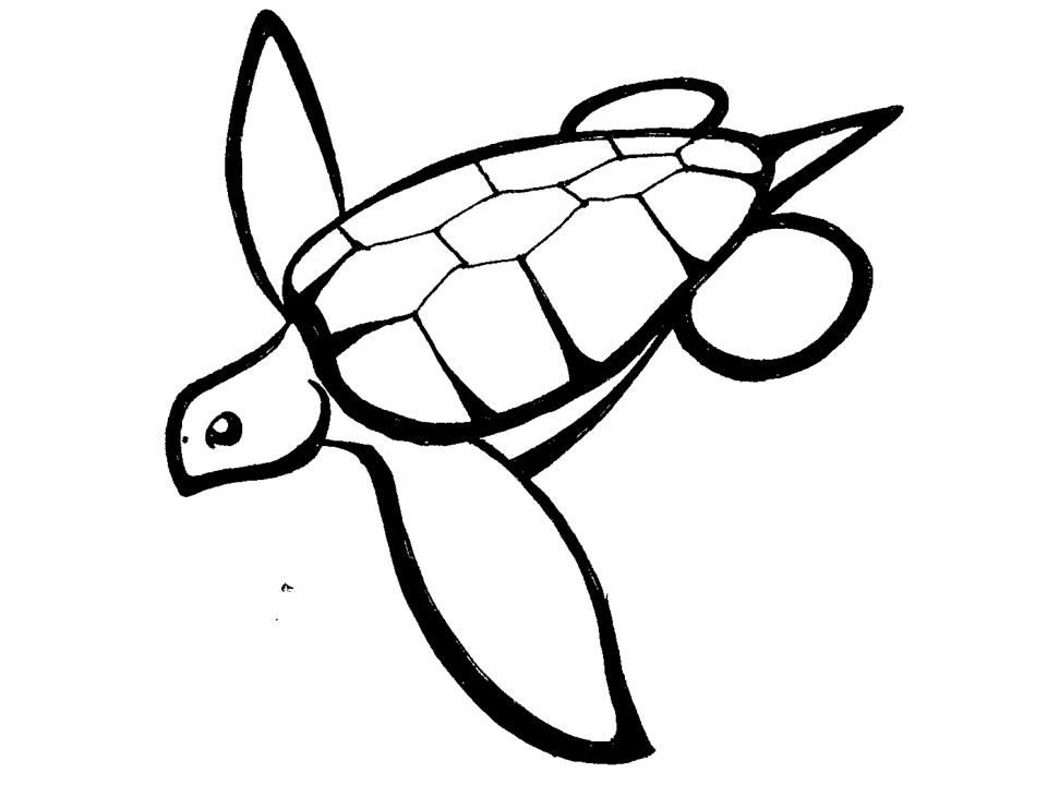 Caretta Research Project On The Web.