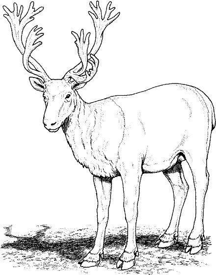 caribou clip art #26.