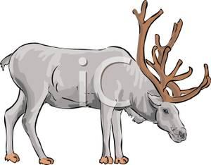 Caribou Clipart Image.