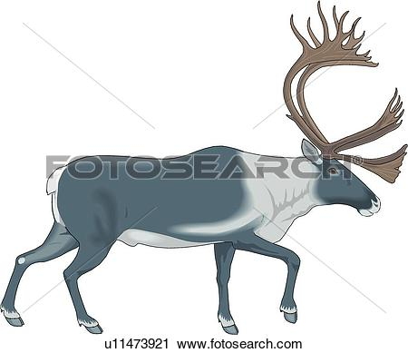 Clipart of Caribou u11473921.