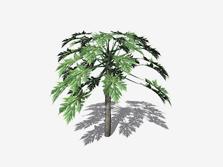 Free High Resolution graphics and clip art: tropical trees 2.
