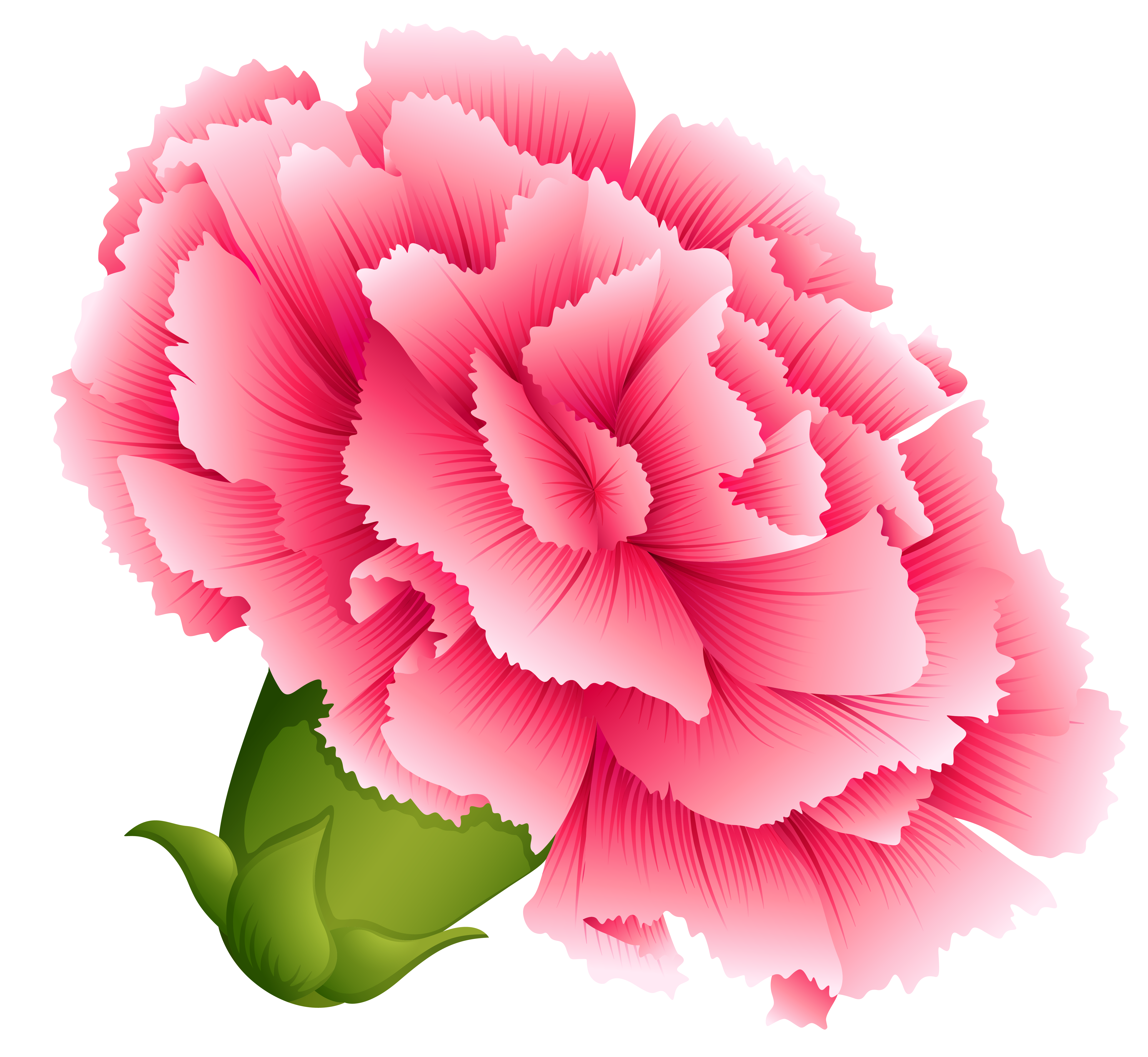 Pink Carnation PNG Clipart Image.