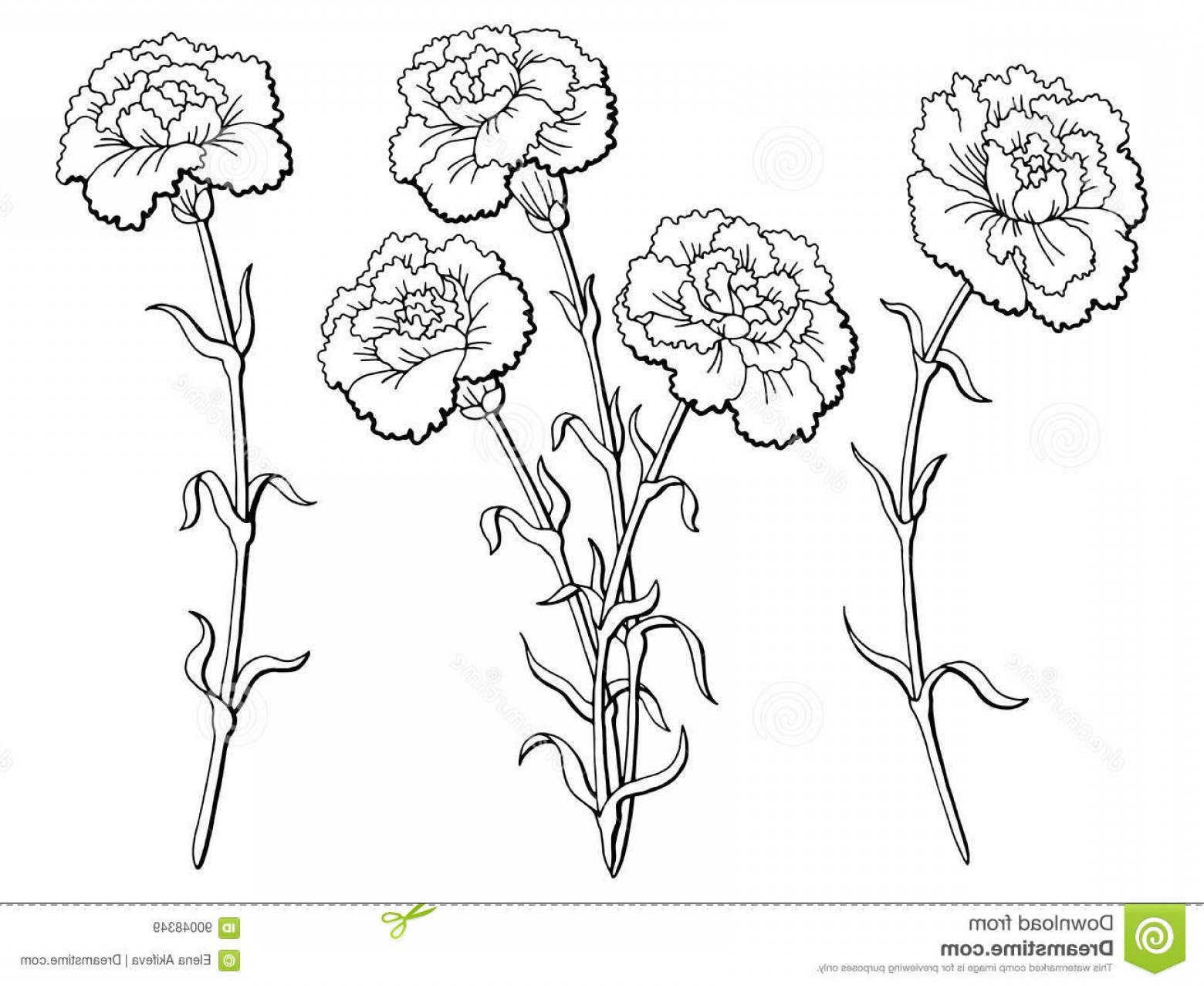 Stock Illustration Carnation Flower Graphic Black White.