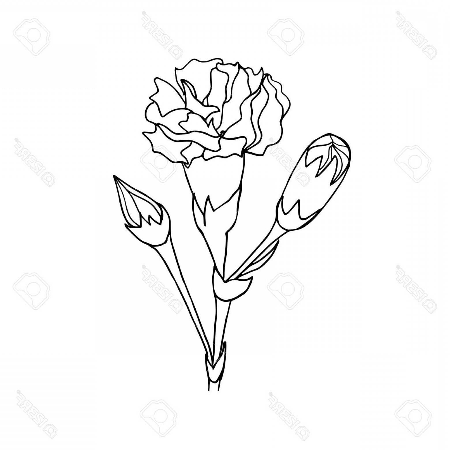 Photostock Vector Black And White Ink Hand Drawn Vector.