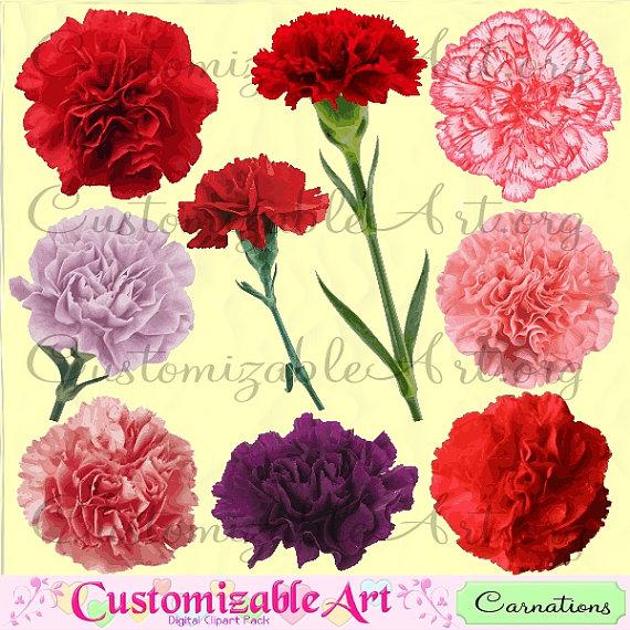 Carnation Clipart Digital Carnation Clip Art by CustomizableArt.
