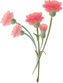 Carnation Flower Gvozdika 6 Clipart Picture Free Download.