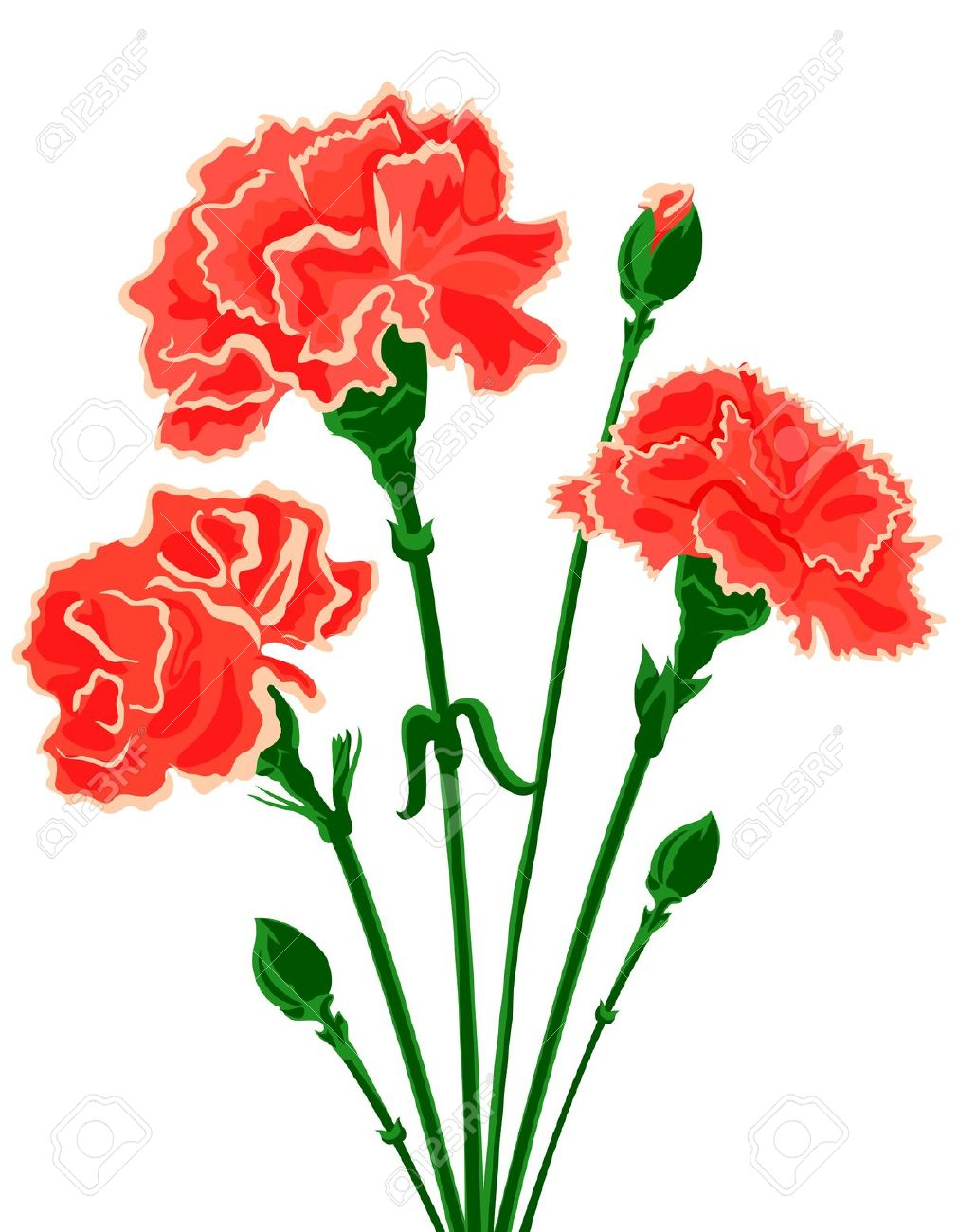 Vector Bouquet Of Carnations Royalty Free Cliparts, Vectors, And.