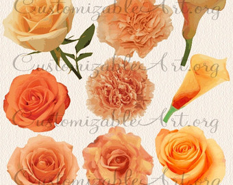 Carnations clipart.