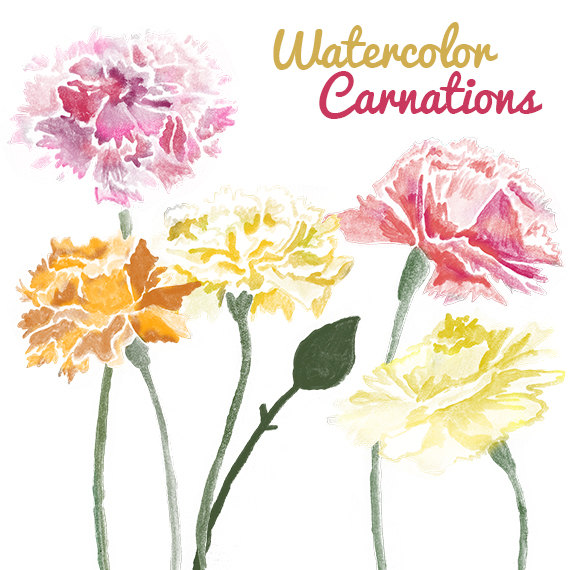 Watercolor Carnation Flower Clip Art for Scrapbooking Instant by.