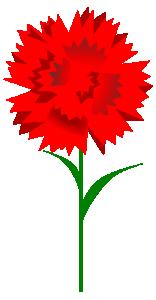 Carnation Flower Clip Art Download.