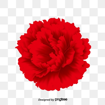 Red Carnation PNG Images.