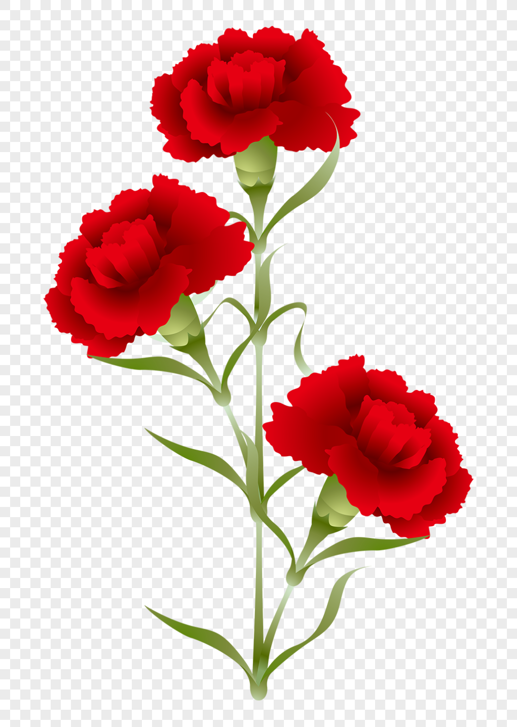 Carnation Png (94+ Images In Collection) #547508.