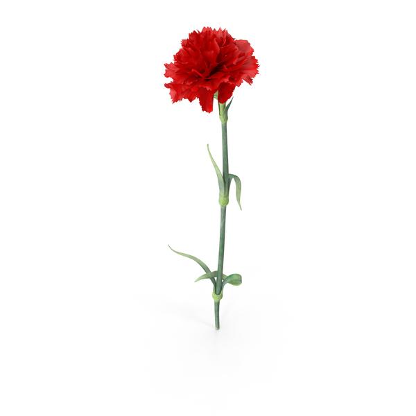 Carnation PNG Images & PSDs for Download.