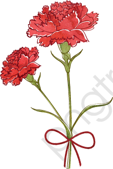 Vector Carnation, Carnations, Hand Painted, Red PNG and Vector with.