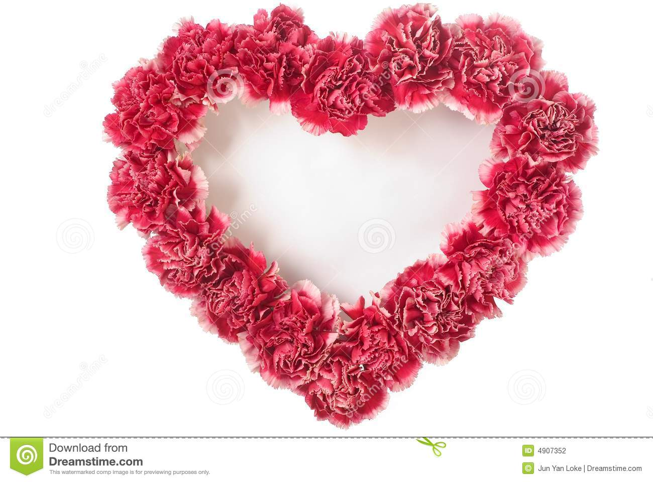Carnation In Love Shape stock photo. Image of romance.