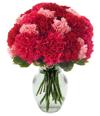 Very Berry Carnations at From You Flowers.