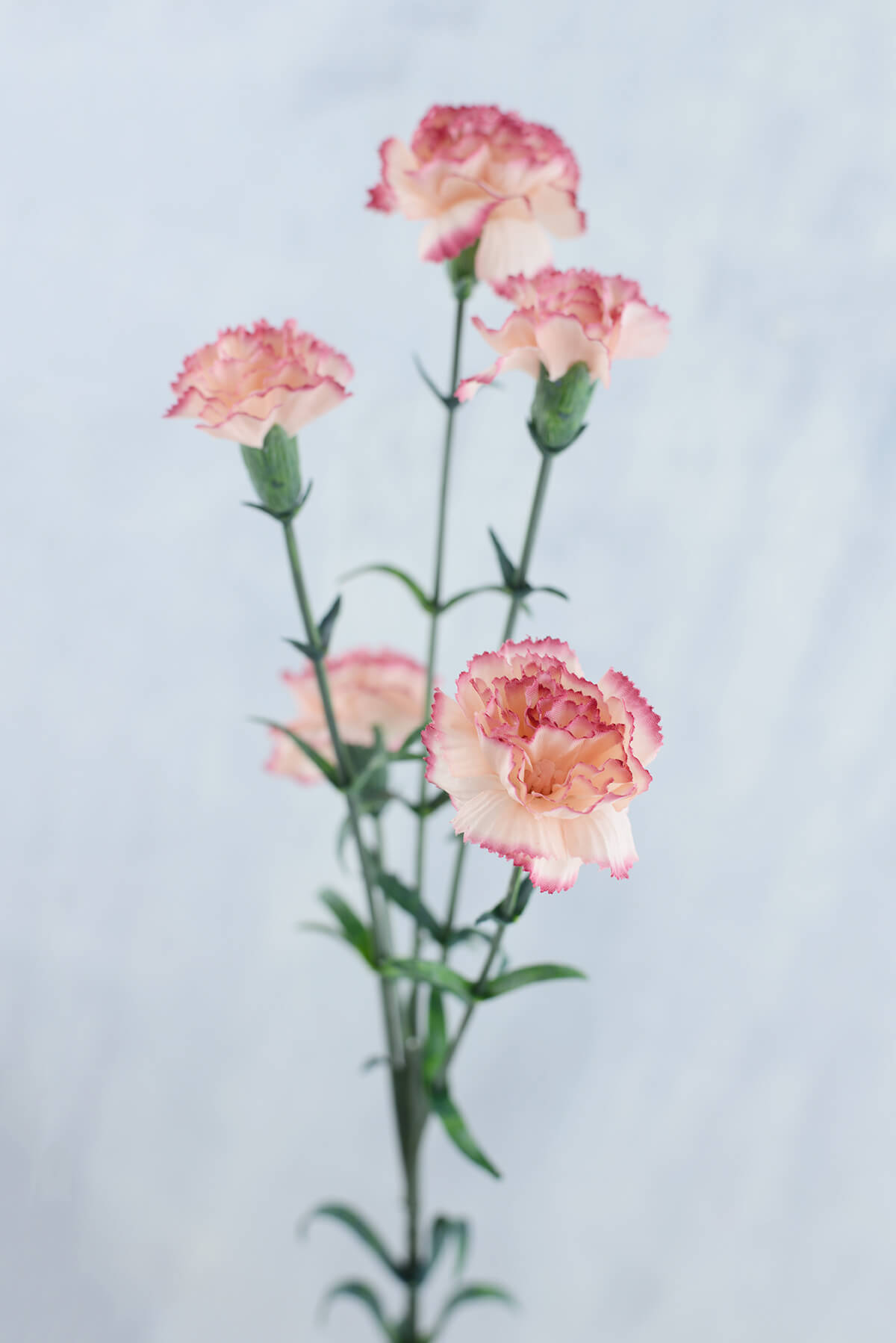 Carnations Peppermint 27.5in.