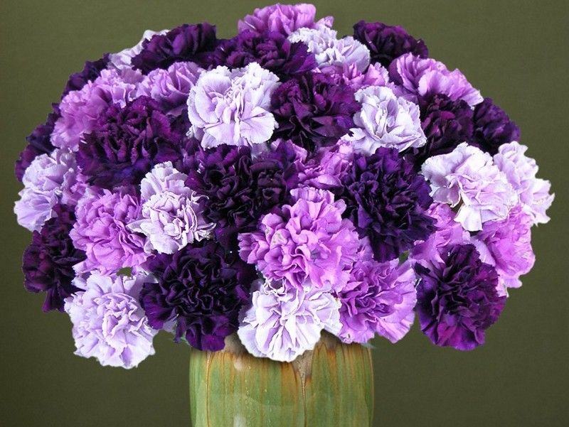 History and Meaning of Carnations.